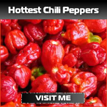 Hottest Chili Peppers